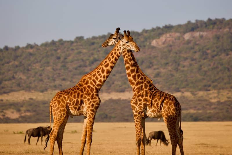 Honeymoon Destinations 2021: Tanzania